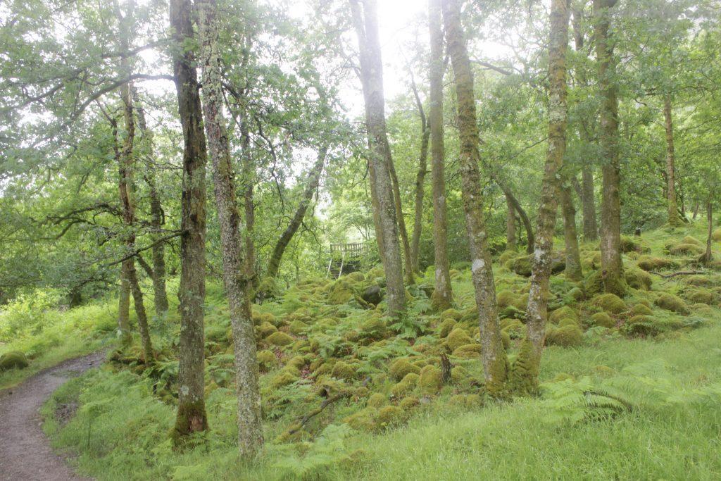Rowardennan West Highland Way
