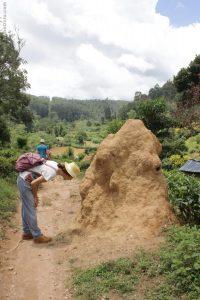 Termitero Ella Sri Lanka