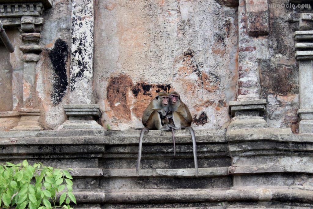 Sacred Quadrangle Polonnaruwa